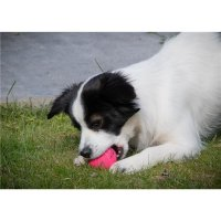 Dog Comets Ball Stardust Rosa S
